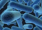 biocidas y tratamientos bacteriológicos